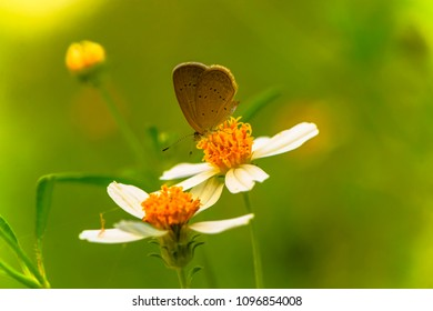 Butterfly with flower in the morning.