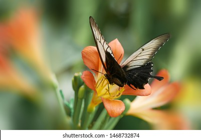 Butterfly and flower. Nature. Macro