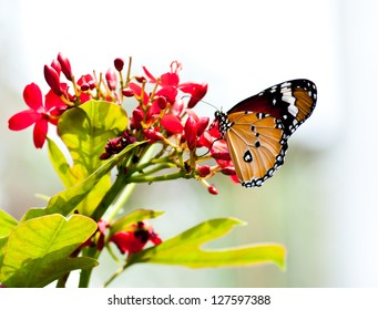 Butterfly and flower in the park