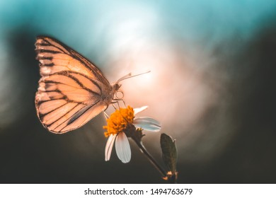 butterfly and flower at sunset