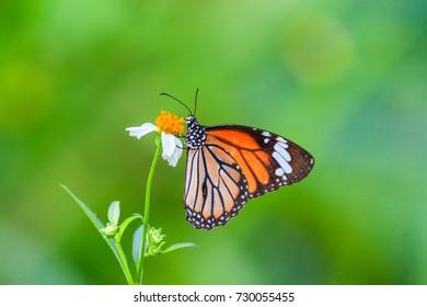 Butterfly in flowers garden
