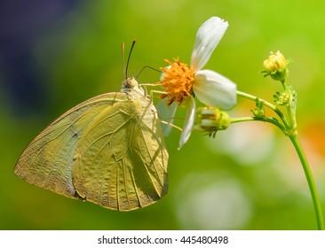 butterfly fly on flower