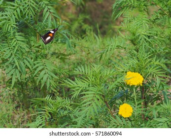 Butterfly flying in the air in natural background