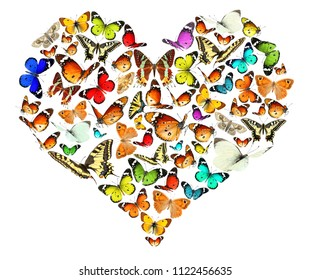 Butterfly flying. Heart created of colorful  butterflies. Isolated on white