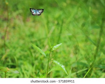 Butterfly flying on natural background