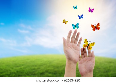 butterfly flying outdoors on a beautiful nature with freedom environment concept.