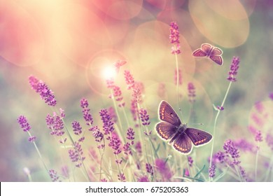 Butterfly flying over lavender flower, butterflies on lavender flower