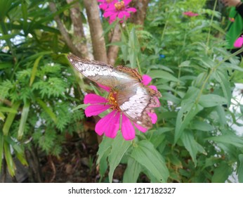 Butterfly Flying Pink Flower