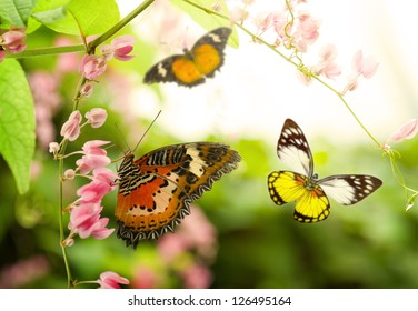 butterfly flying in the summer on a beautiful tree