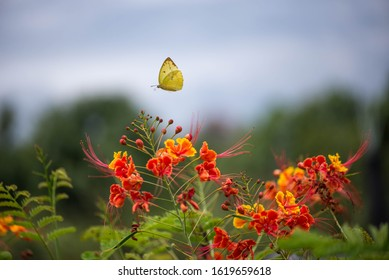 Butterfly Flying in a summer spring field , Chamomiles daisies macro in summer spring field on background blue sky with sunshine and a flying butterfly, nature panoramic view. Summer natural landscape