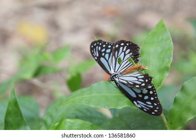 butterfly in the forest