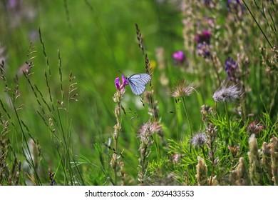 The butterfly in forest, Krasnoyarsk, Siberia, Russia.
