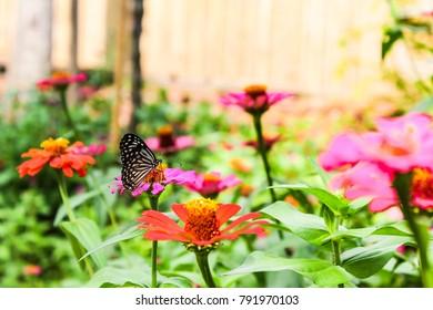 Butterfly in the garden. Butterfly feeding from flower.
