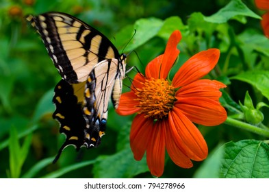 Butterfly getting nectar