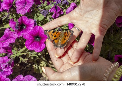 butterfly with a girl's hand crosses a flower