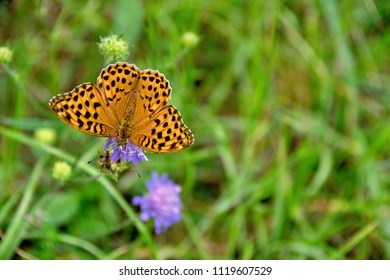 Butterfly in grass pollinating flowers