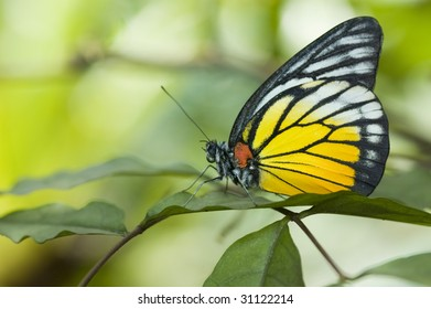 butterfly with green background