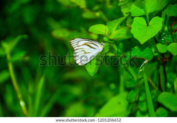 Butterfly Green Background Butterfly Nature Wallpaper Stock Photo