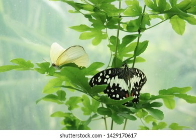 Butterfly and green ivy with background blur