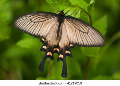 Butterfly in Hakone, Japan.