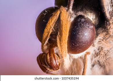 Butterfly Head at High Magnification, 5x Macro