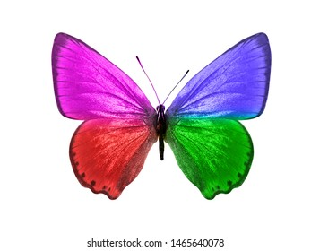 butterfly isolated on white background. wings with purple, blue, green, red color.