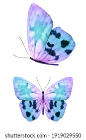 butterfly isolated on white. wings with purple and pink color. High quality photo