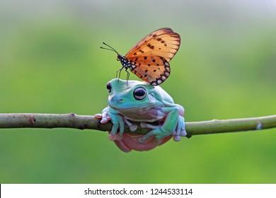 Butterfly landing on head dumpy frog, animal friendly