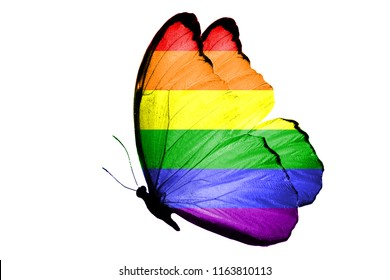 Butterfly with LGBT flag isolated on white background