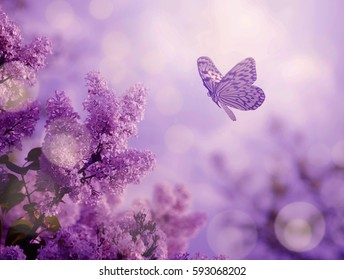 Butterfly and lilac organ bush in spring nature sunset
