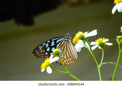 Butterfly with little flower in garden on blurry background,select focus with shallow depth of field.