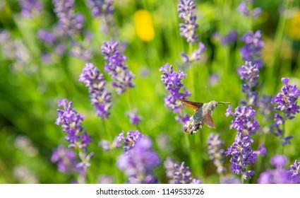 Butterfly Long Sleeve