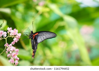 Butterfly in a lovely garden with copy space