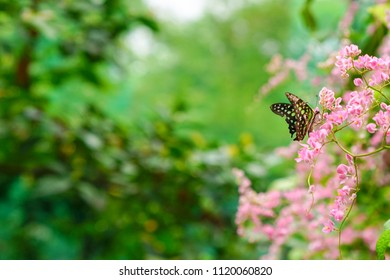 Butterfly in a lovely park with copy space