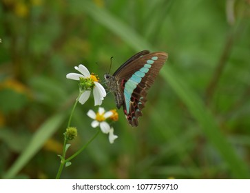 Butterfly loves floweras
