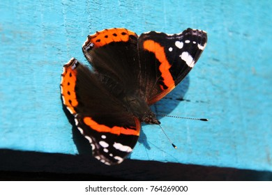 butterfly, butterfly macro photografy, wings of the butterfly
