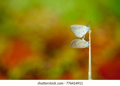 Butterfly mating on branches