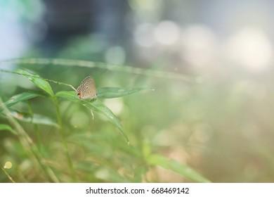 butterfly (butterfly, metamorphosis, colorful,bokeh).