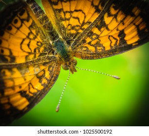 Butterfly moth close up-natures photography