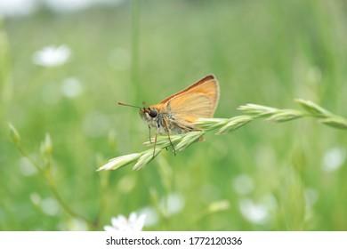 butterfly moth in garden trass