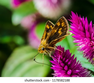 Butterfly moth on flower with artistic background nature photography