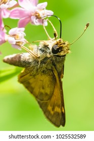 Butterfly moth on flower eating. Nature photography/macro