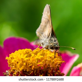 Butterfly moth on flower nature macro photography