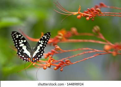 Butterfly in nature.