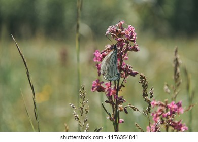 butterfly nature flovers