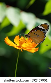 The butterfly in nature scene