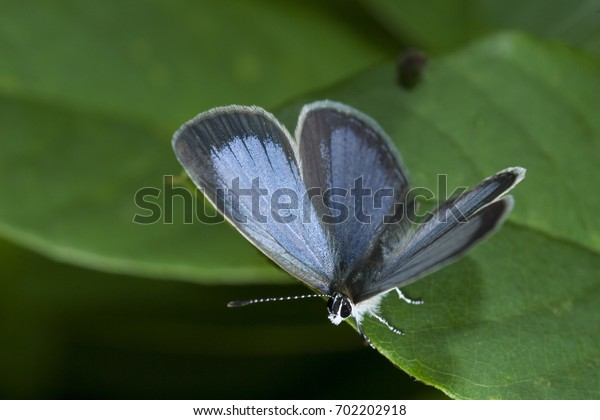 butterfly in nature wild
