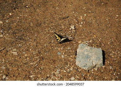 Butterfly on the bank of river Eno