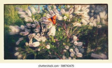 butterfly on blossom with effects