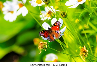 Butterfly on blossom flower on green meadow